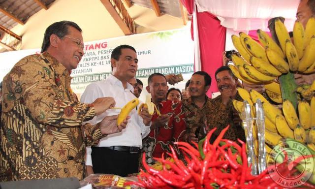 Coba pisang/TOK SUWARTO/MENTERI Pertanian Andi Amran Sulaiman mencicipi pisang raja bulu dari bibit varietas unggul yang dikembangkan Fakultas Pertanian UNS di Kec. Jenawi Kab. Karanganyar.